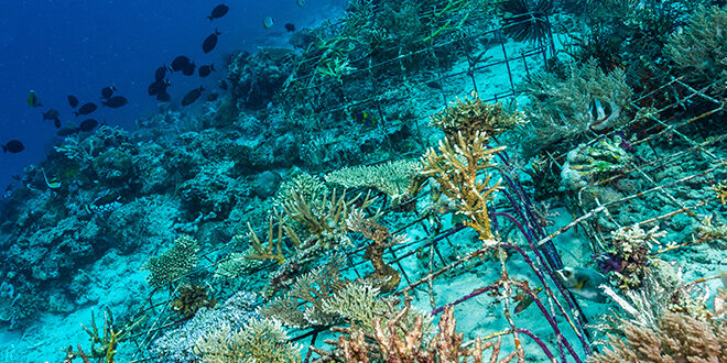 Article Feature Image of an artificial reef